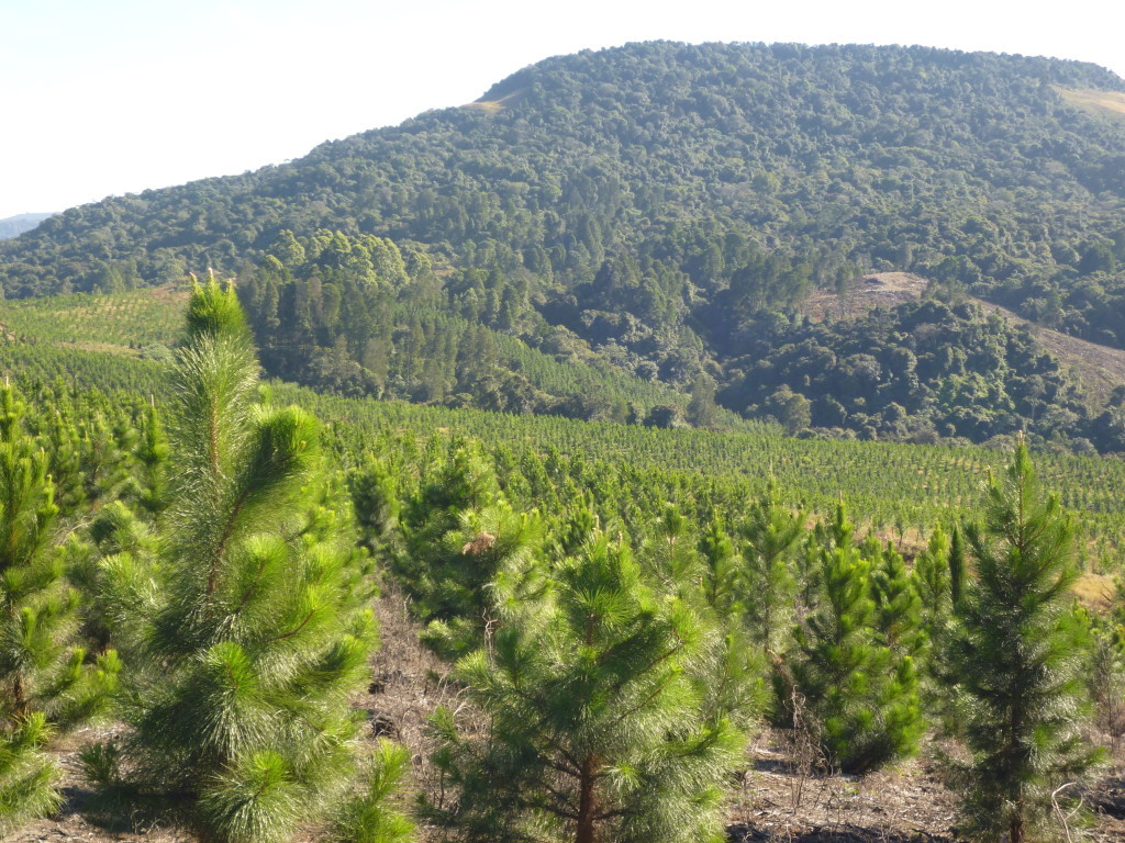 pine-farms10