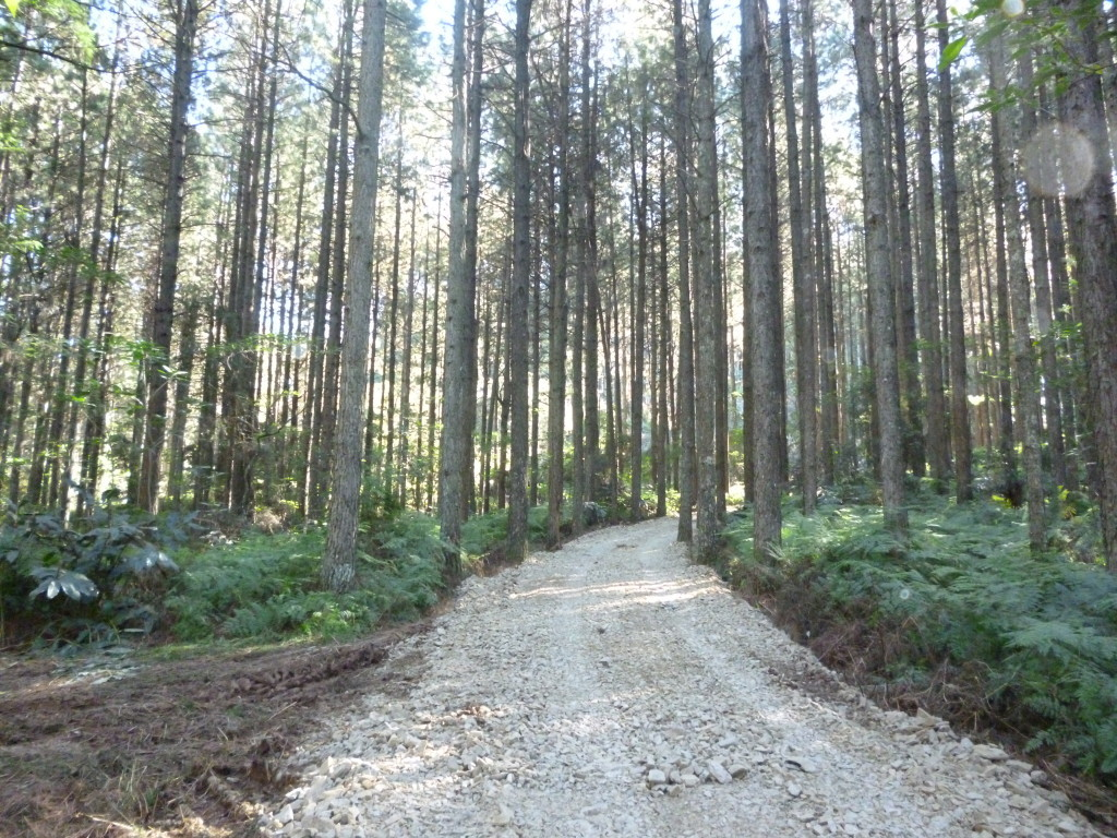 pine-farms3