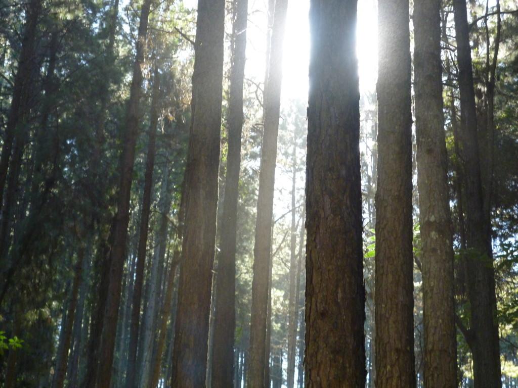 pine-farms4