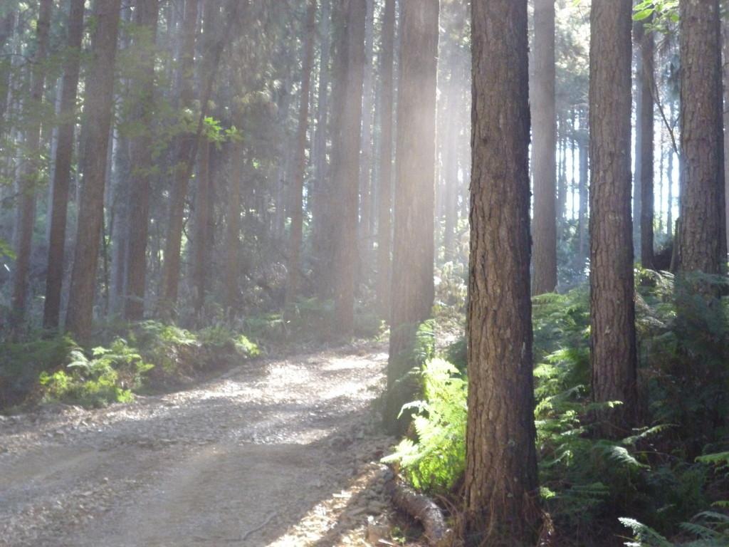 pine-farms6