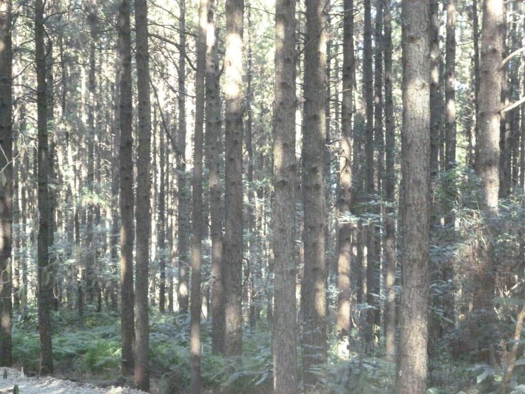 pine-farms7