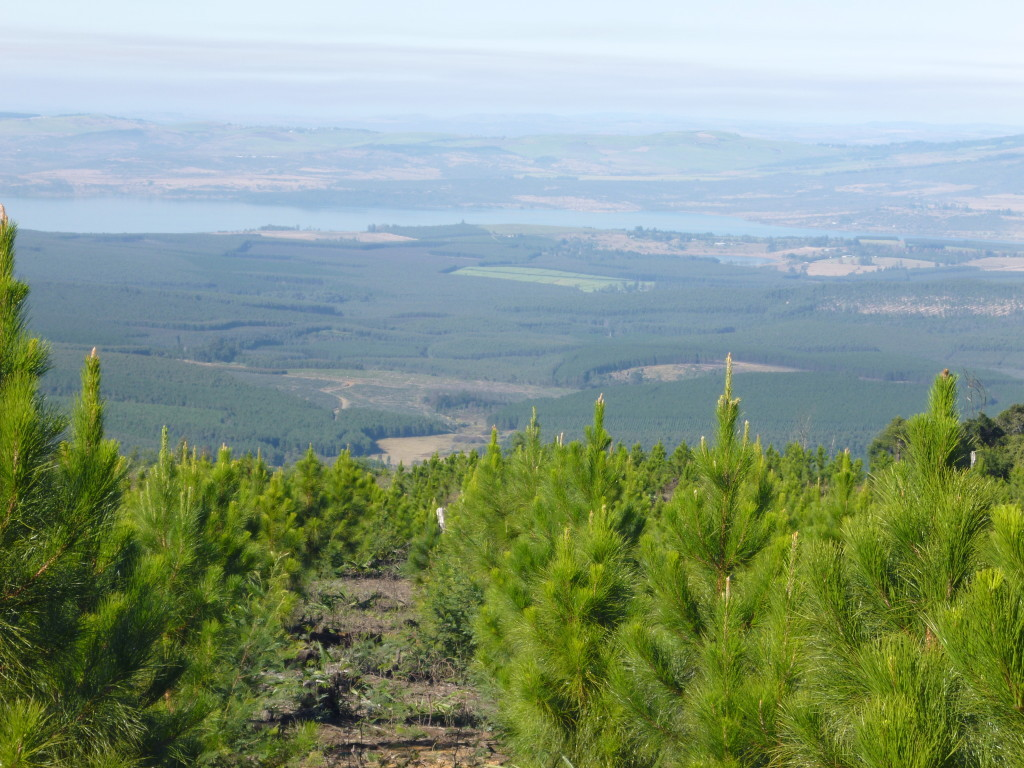 pine-farms9